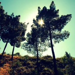 landschap-spanje